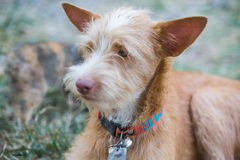 The young dog. Portriat photography royalty free stock photo