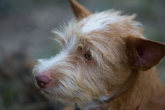 The young dog. Portriat photography royalty free stock image