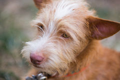 The young dog. Portriat photography stock image