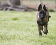 Young dog running with copy space