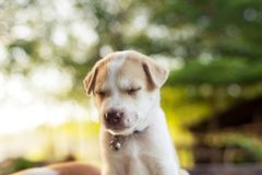 Young dog sleep on table. royalty free stock photos