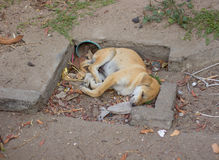 Young dog sleeping on the garbage heap Stock Photos