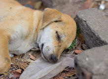 Young dog sleeping on the garbage heap Stock Photography