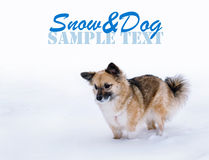 Young dog in the snow Stock Photography