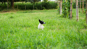 Young dog in tall grass Royalty Free Stock Photos