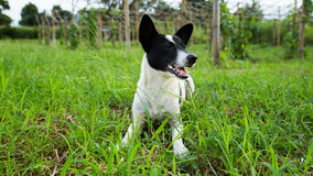 Young dog in tall grass Stock Photography