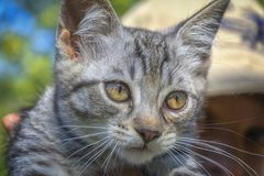 A young domestic cat. Close up Royalty Free Stock Photos