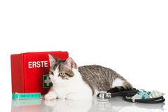 Young domestic cat Royalty Free Stock Photos
