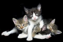 Young Domestic Cats Cutout Stock Photos