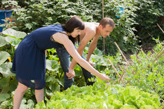 Young domestic pair in a garden Stock Images