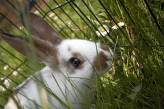 Young domestic rabbits Royalty Free Stock Photo