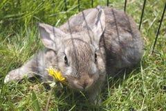 Young domestic rabbits Stock Image