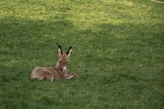 Free Young Donkey In A Field On A Farm Stock Image - 206687581