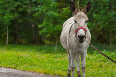 Young donkey portrait on a sunny day Stock Photography