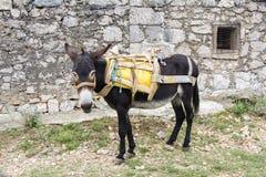 Young donkey Royalty Free Stock Image