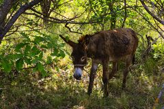 Young donkey under tree Royalty Free Stock Photo