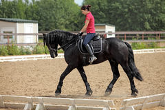 Young dressage rider on black friesian horse Stock Image