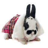 Young dressed rabbit Royalty Free Stock Photography