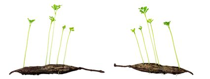 Young growing plant Royalty Free Stock Images