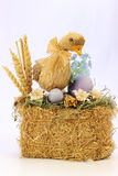 A young duck on straw with eggs Stock Photo