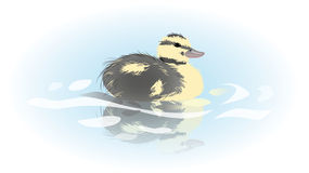Young duckling Royalty Free Stock Photography