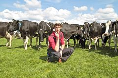 Young dutch farmer with his cows Royalty Free Stock Photo