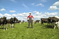 Young dutch farmer with his cows. In the countryside Stock Photos