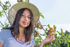 Young dutch woman holding apples in orchard Stock Photos