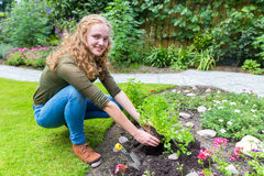 Young dutch woman planting parsley in garden soil Royalty Free Stock Image