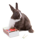 Young dwarf rabbit on a box of matches. Isolated on white backgr Stock Photos
