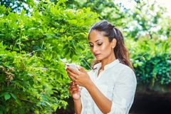 Young East Indian American Woman texting on cell phone outdoor at Central Park, New York. Wearing white shirt, standing in front of street bridge coved with stock photography