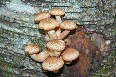Young edible mushrooms Stock Photos