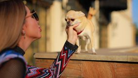 Young elegant woman touch her dog in city. Young elegant woman touch her little dog in city stock footage