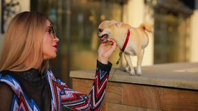 Young elegant woman touch her dog in city. Young elegant woman touch her little dog in city stock video