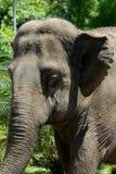 Young elephant Stock Photo