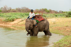 Young Elephant happiness with water after Ordination parade on elephant Stock Images