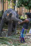 A young elephant plays with a mahout within the Temple of the Sacred Tooth Relic complex in Kandy, Sri Lanka. Royalty Free Stock Photos