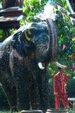 Young elephant splashing water. Stock Images