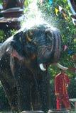 Young elephant splashing water. Stock Photo