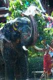 Young elephant splashing water. Stock Photography