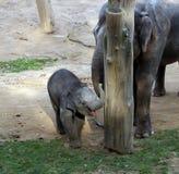 Happy Elephant Kid at the Zoo stock image