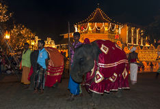Young elephants parade past the Temple of the Sacred Tooth Relic in Kandy during the Esala Perahera, Sri Lanka. Stock Photo