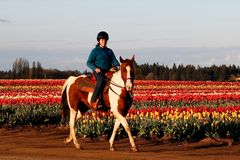 Young Equestrian in Blooming Tulip Field Royalty Free Stock Images