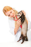 Young eterinarian examines a patient ferret Stock Photo