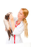 Young eterinarian examines a patient ferret Stock Photos