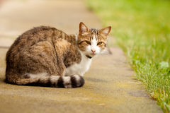Young european cat. Is waiting for owners to came back and feed him Royalty Free Stock Image