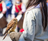 Young falcon on the glove Royalty Free Stock Photo