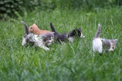 Young family cats. Young small cats playing in the grass Stock Photos