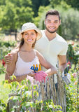 Young family in gloves planting flowers Stock Image