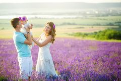Young family in a lavender field royalty free stock images